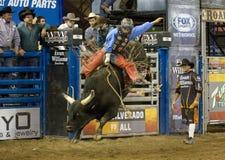 Cowboy del cavaliere del toro del rodeo immagine stock