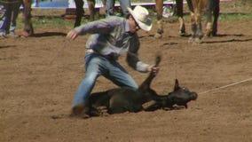 Cowboy del rodeo - vitello che Roping al rallentatore - clip 3 di 7 stock footage