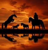 Cowboy della siluetta con i cavalli Fotografie Stock Libere da Diritti