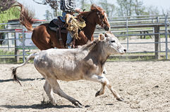 Cowboy, der mit Kuh arbeitet Lizenzfreie Stockfotografie