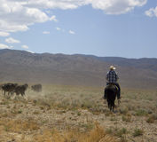 Cowboy in the Desert Royalty Free Stock Images