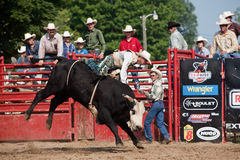 Cowboy die een stier in de concurrentie berijdt Stock Fotografie