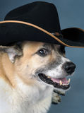 Cowboy Dog. Royalty Free Stock Image