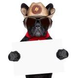 Cowboy Dog Photographie stock libre de droits
