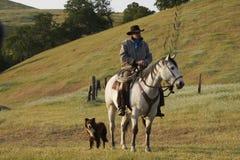 Cowboy and Dog. Cowboy on horseback with herding dog Royalty Free Stock Photos