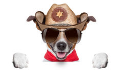 Cowboy dog Royalty Free Stock Photos