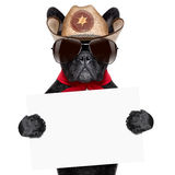 Cowboy dog. Cool cowboy dog holding a white blank big banner or placard royalty free stock photography