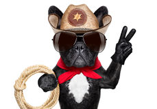 Cowboy dog. Cool cowboy dog with peace or victory fingers and a rope stock photos