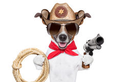 Cowboy dog. Cool cowboy dog with a pistol , hat and a rope royalty free stock image