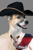 Cowboy Dog. Stock Image