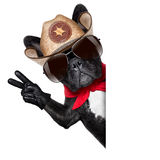Cowboy dog. Peace or victory fingers cowboy dog beside white blank banner oder placard stock photo