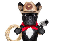 Cowboy dog Stock Photography