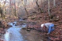 Cowboy Drinking From the Stream Royalty Free Stock Photography