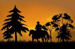 Cowboy em um cavalo Foto de Stock