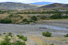 Cowboy en parc national de Torres del Paine, Chili Photos libres de droits