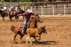 Cowboy et cheval chassant le veau au rodéo image libre de droits