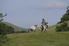 Cowboy-führendes Pferd Stockfotografie
