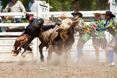 Cowboy falls from dangerous bull Royalty Free Stock Image