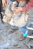 Cowboy farrier working. Cowboy farrier working on a horseshoe on the ranch outdoors Stock Photo