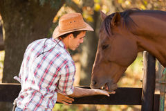 Cowboy feeding horse Stock Images