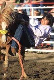 Cowboy getting bucked Royalty Free Stock Image