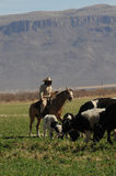 Cowboy and grazing cows Stock Photography