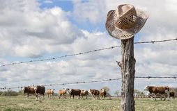 Cowboy hat hanging on fence post while cattle graze in background. Stock Image