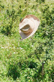 Cowboy hat hanging on thorn bush Stock Images