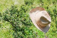 Cowboy hat hangs on thorn bush Royalty Free Stock Photo