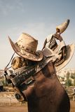 Cowboy hat and horse saddle on the farm royalty free stock images