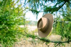 Cowboy hat on the tree. Cowboy hat hung in tree in autumn nature stock images