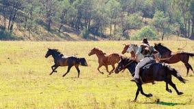 A Cowboy Herding Wild Horses. A cowboy herding racing wild horses in beautiful sunlight in spectacular Australian countryside stock photos