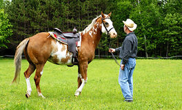 Cowboy and his Horse. A four-year-old Paint horse is saddled up and ready to ride Stock Photography