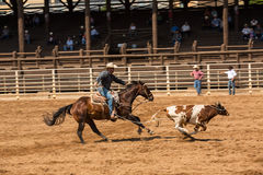 A Cowboy And His Horse Chasing Calf At Rodeo Stock Photography