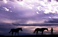 Cowboy & His Horses Royalty Free Stock Photos