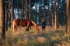 Cowboy with a horse. Horse and cowboy in the pine forest Royalty Free Stock Photo
