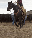 Cowboy on horse Stock Images