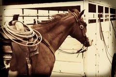 Cowboy Horse avec la corde dans la selle Photographie stock libre de droits