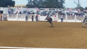 Cowboy on horse Royalty Free Stock Photo