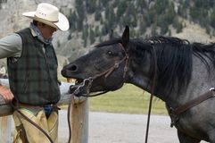 Cowboy/Horse Conversation. A cowboy enjoying a conversation with his horse stock photos