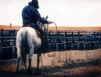 Cowboy On Horse de fourrage avec la corde Photographie stock