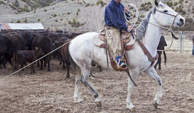 Cowboy and horse moving cows Royalty Free Stock Photography