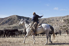 Cowboy and horse moving cows Royalty Free Stock Photos