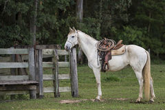 Cowboy horse ready for work Royalty Free Stock Image
