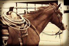 Cowboy Horse with Rope in Saddle Stock Photography