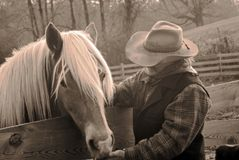 Cowboy and horse/sepia. Man in western gear feeding his horse a treat. The horse is a beautiful Haflinger stock image