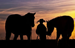 Cowboy With Horses Stock Photography