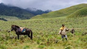 Cowboy i Bromo, Indonesien Arkivfoton