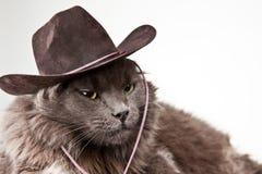 Cowboy-Katze Lizenzfreies Stockfoto