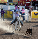 Cowboy with lasso rope calf stock photo